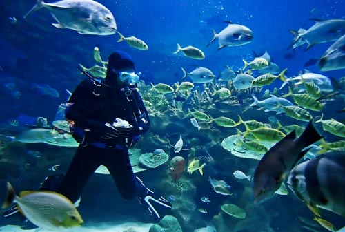 Best Place for Doing Scuba Diving in Goa